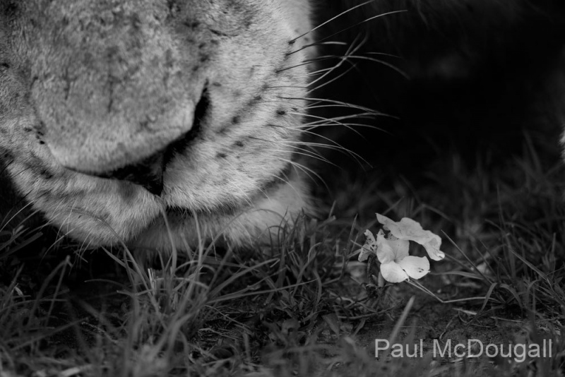 Wildlife photographer Paul McDougall