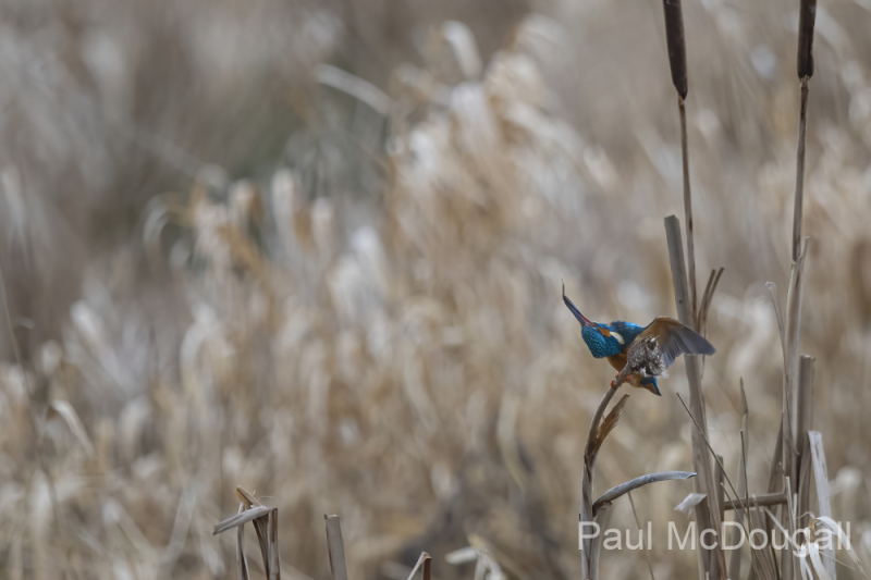 Wildlife Photography by Paul McDougall