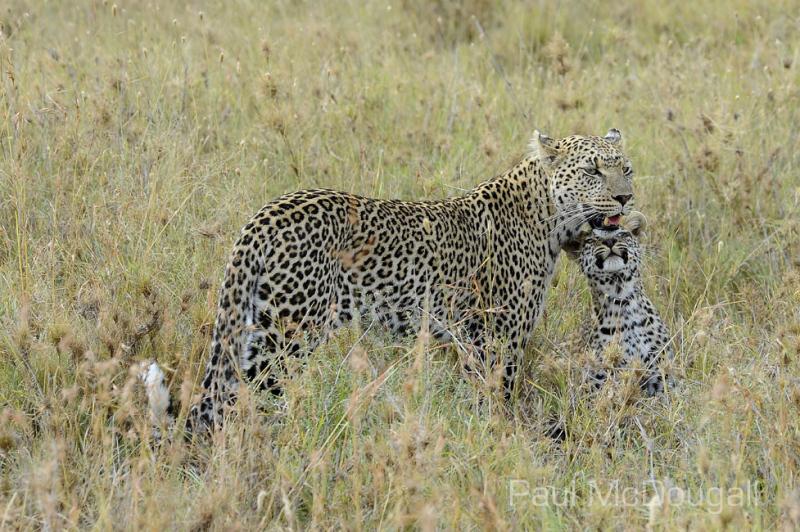 Maasai Mara by Wildlife Photographer Paul McDougall