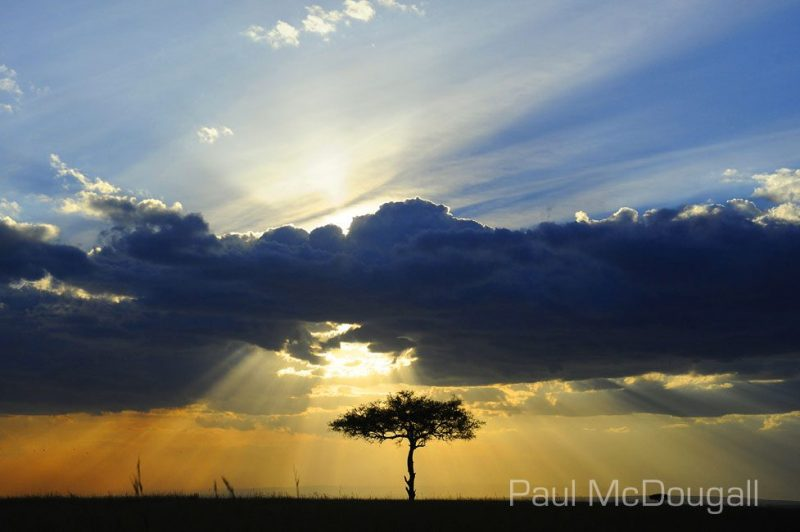 Maasai Mara by Wildlife Photographer Paul McDougall