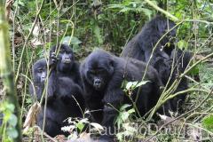 Magical Uganda by Wildlife Photographer Paul McDougall