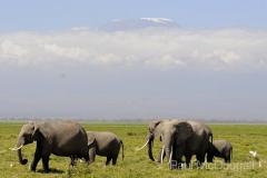 African fauna by Wildlife Photographer Paul McDougall