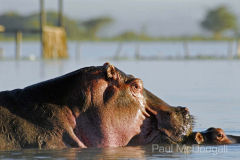African fauna by Wildlife Photographer Paul McDougall