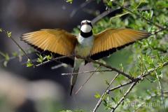 Samburu by Wildlife Photographer Paul McDougall