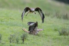 Wildlife photographer Paul McDougall