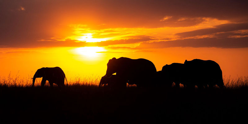 Elephants by Paul McDougall Wildlife Photographer