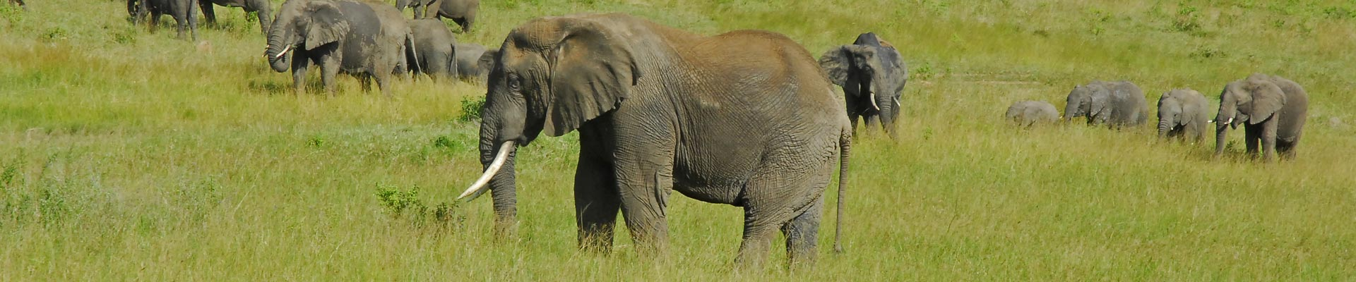 Paul McDougall Wildlife Photographer