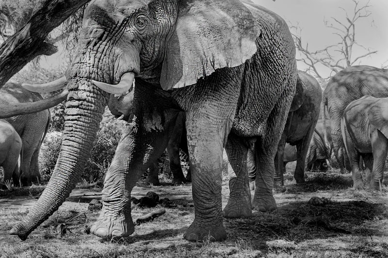 Paul McDougall Wildlife Photographer