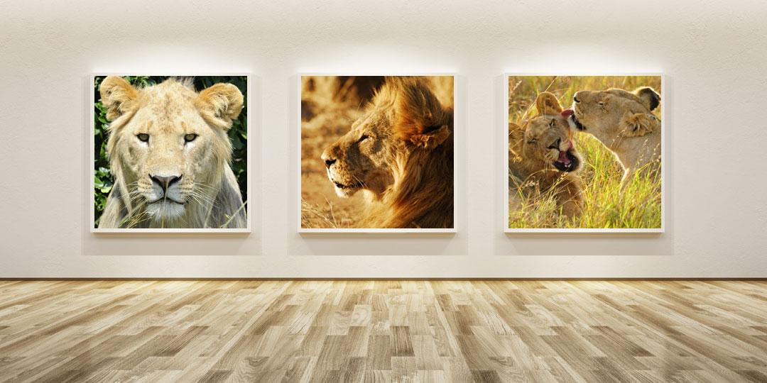 Buy Lion Images