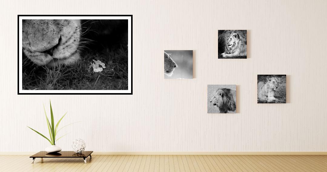 Buying Wildlife Images